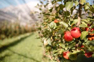 Kraftlaggl Bio-Apfelsaft Naturprodukte von Tiroler Naturbua